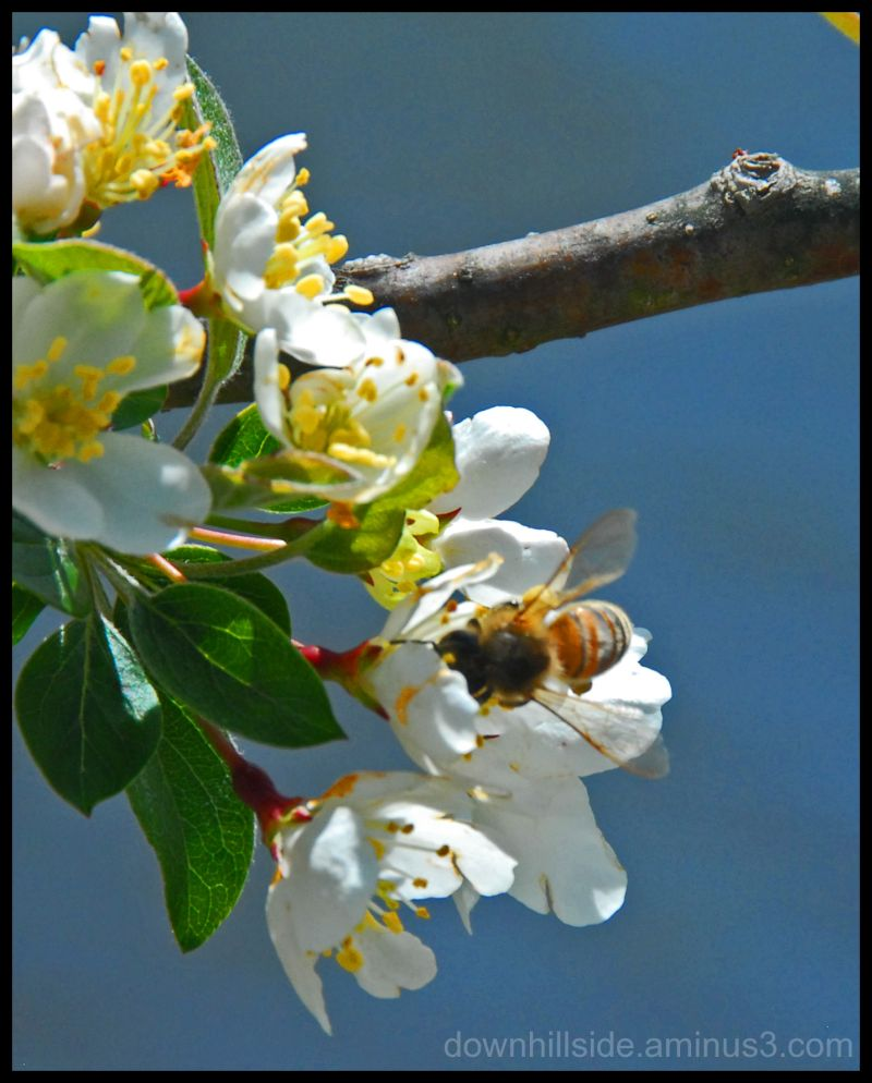 Bee in a Blossom