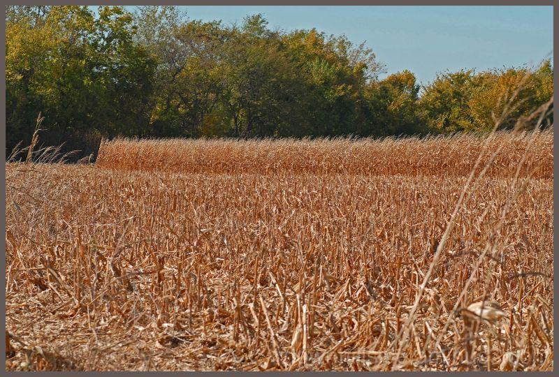 Unfinishd Harvest