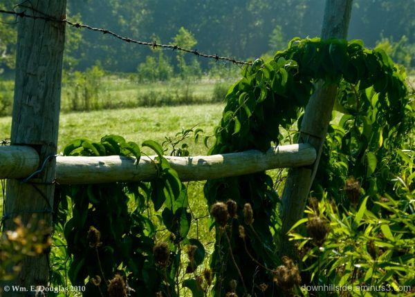 Living Green Horseshoe