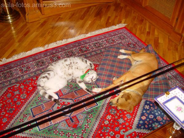 El perro y el gato