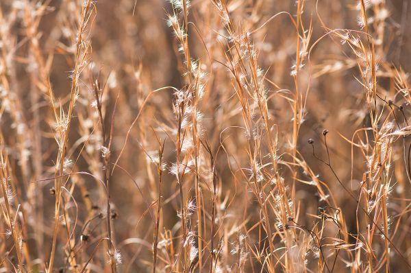 Kansas Grass