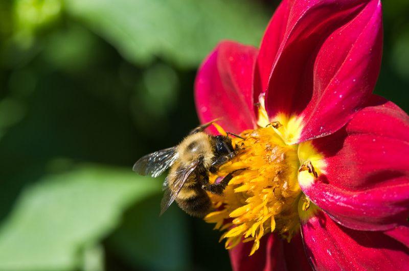 Flower Bee