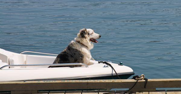 Lubec Maine Dog