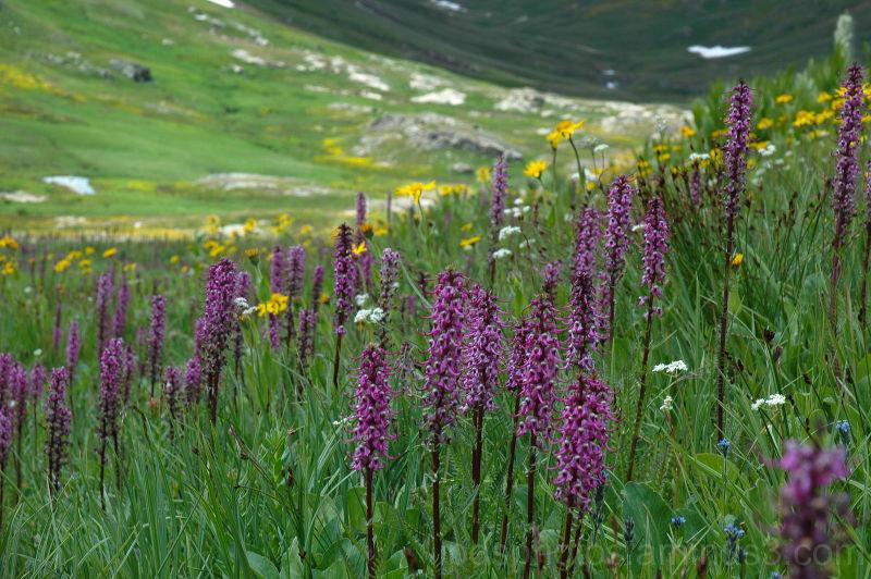 Wildflower Valley II