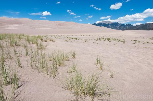Dune 2