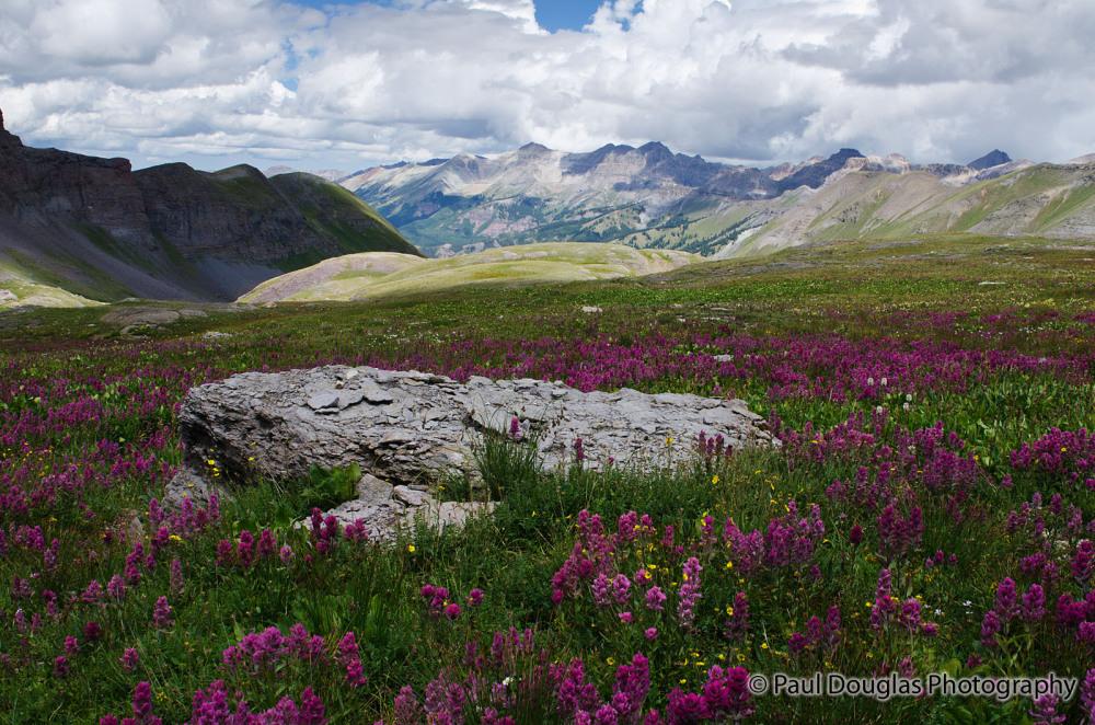 Wildflowers on Black Bear Pass