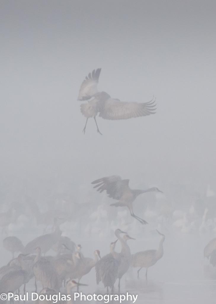 Foggy Landings
