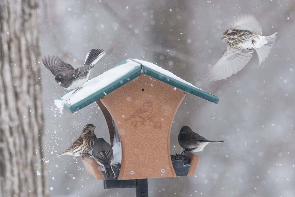 Winter Bird Olympics