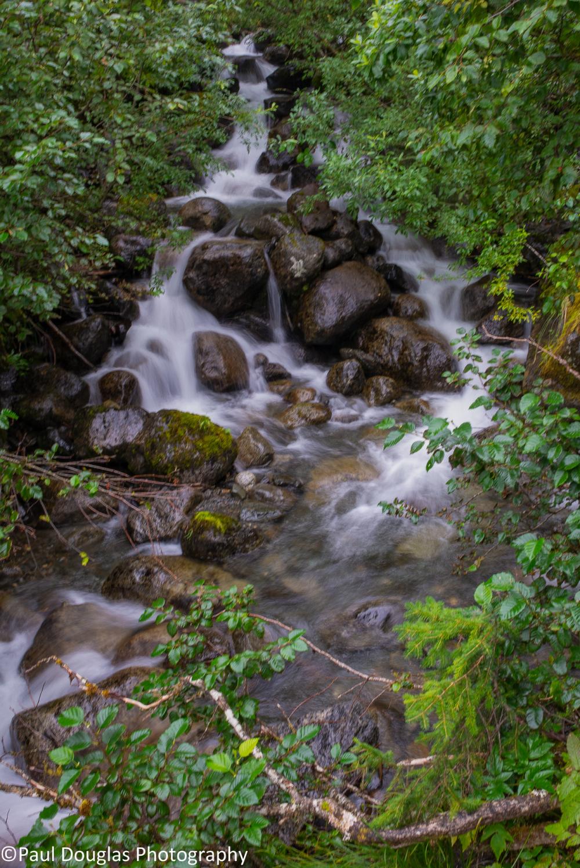 Rainforest Hike 3