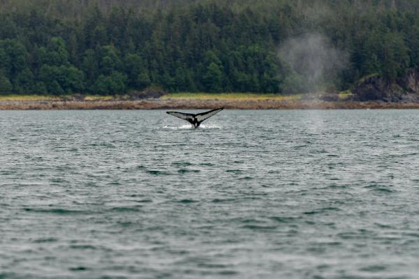 A fluke of nature