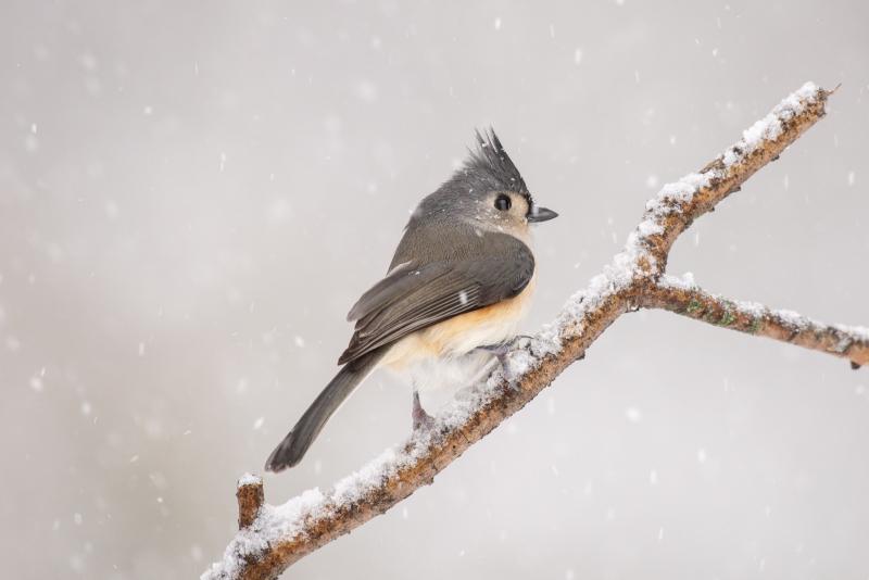 Blizzard Birds - 1