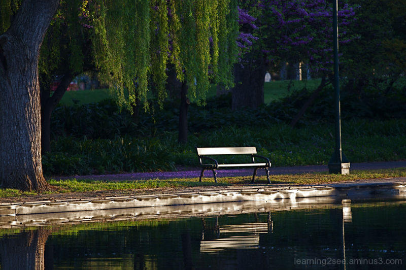 Bench seat in Rymill Park, Adelaide