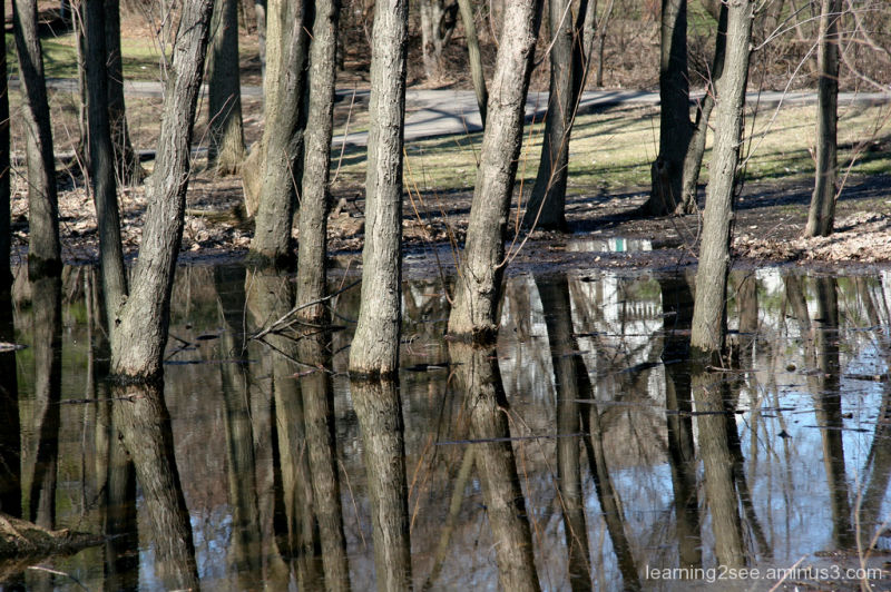 Wet feet trees