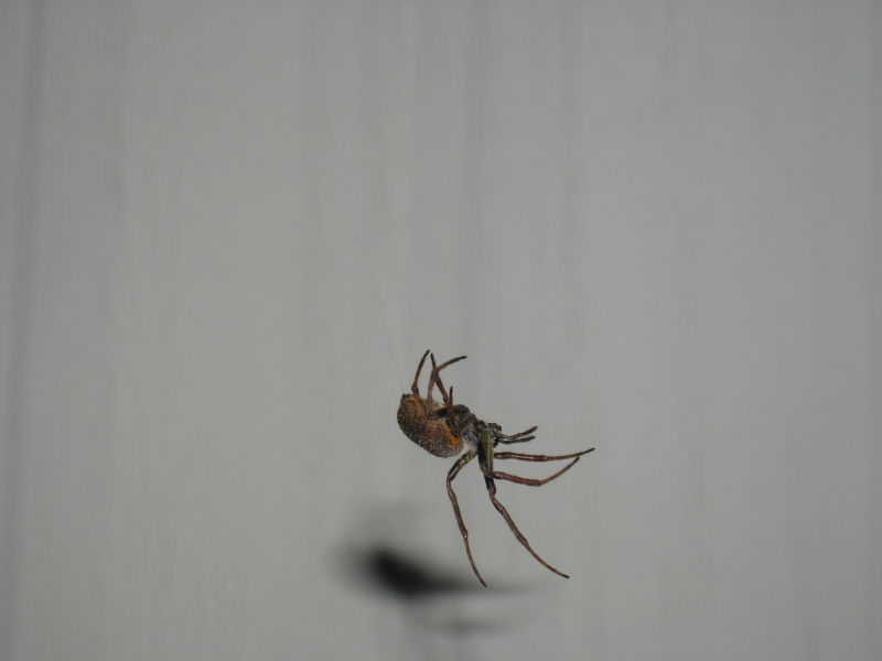 Itsy Bitsy Spider Climbed Up the Water Spout...