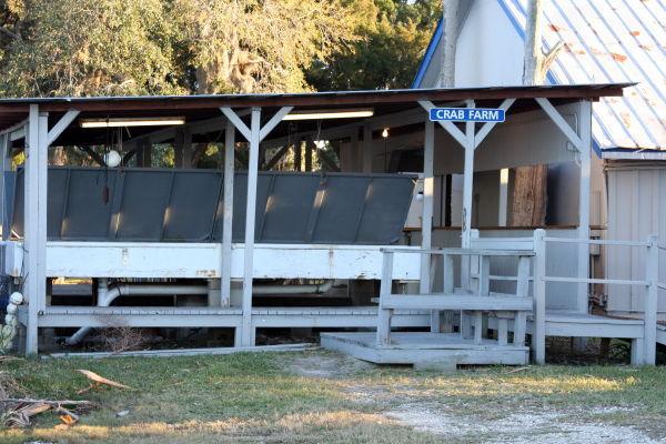 Pecks in Ozello, Florida