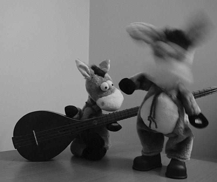 modern donkey