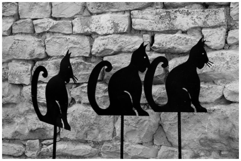 3 petits chats, 3 petits chats ...