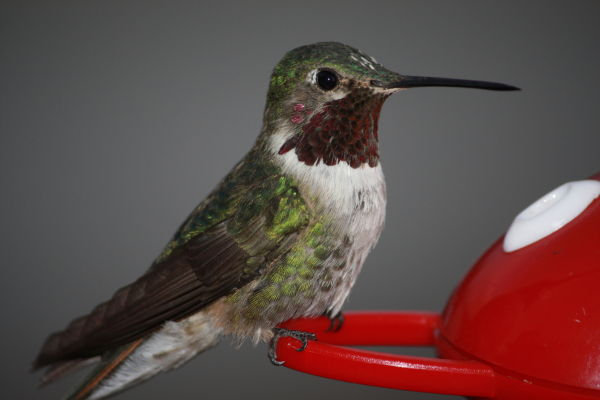 photograph of a humming bird