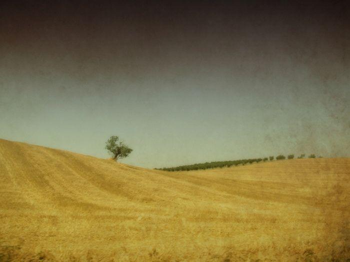 Tuscany II (2)