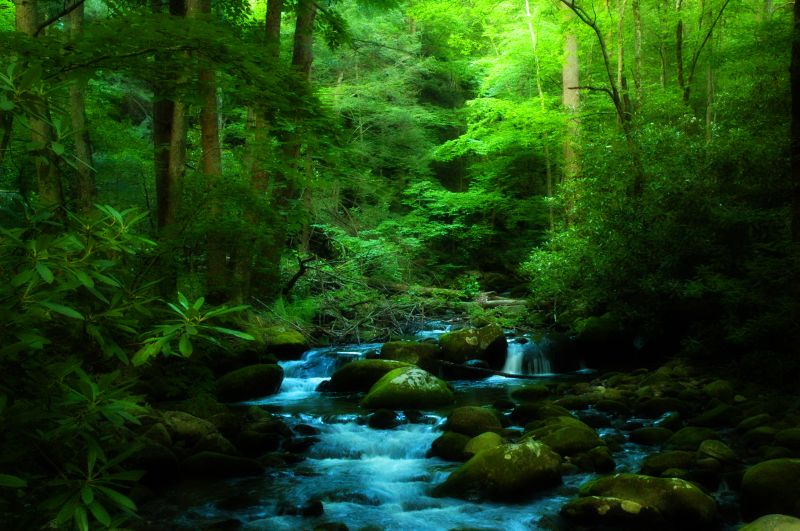 Rivulet-The Great Smoky Mountains