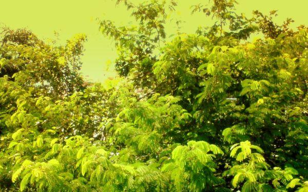 Nature - fresh 'n' green