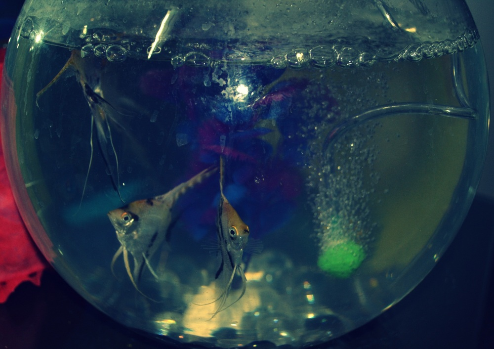My new set of friends..