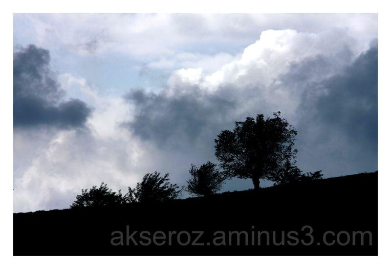 هجمه ابر و درخت