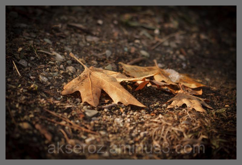 جا مانده از پاییز