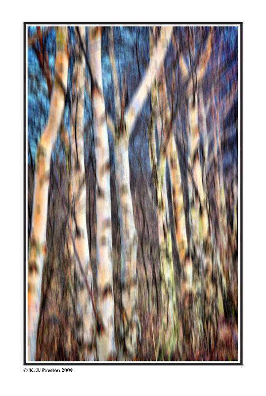 Birch Tree - Silver