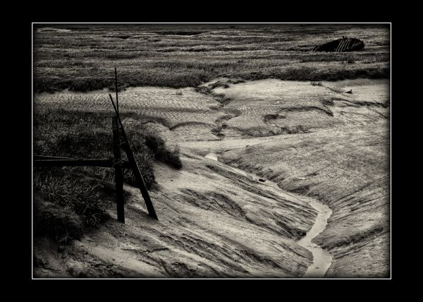 Salt Marshes