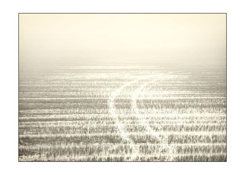 Ice Tracks