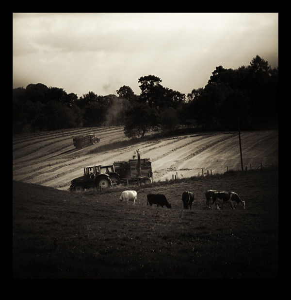 Making Hay in the Cheshire Countryside