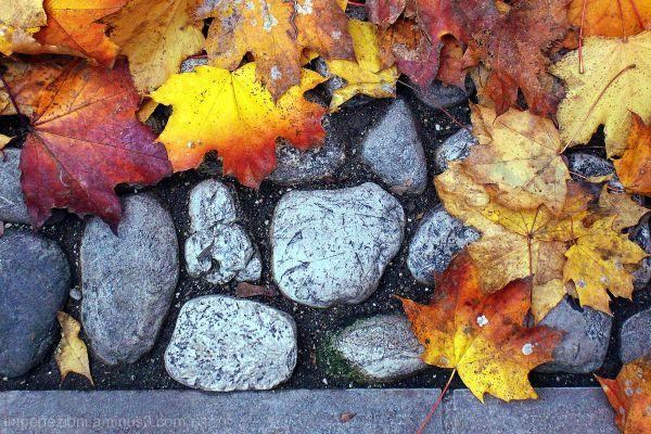 Profumo d'autunno