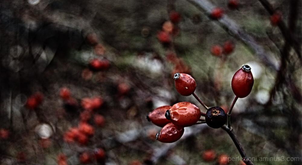 Redberry 1