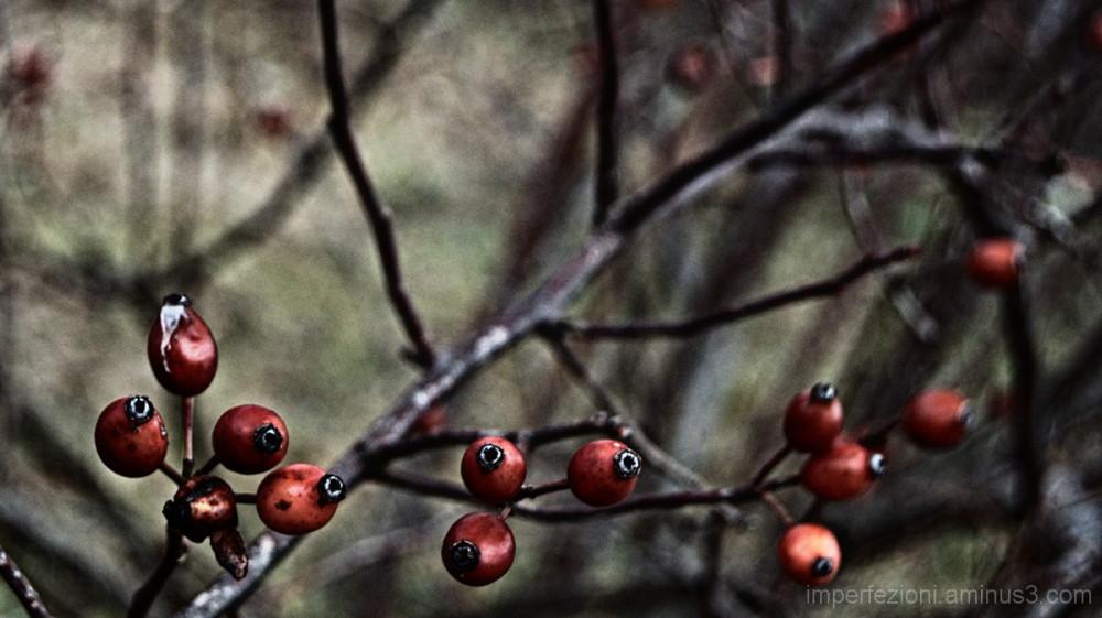Redberry 2