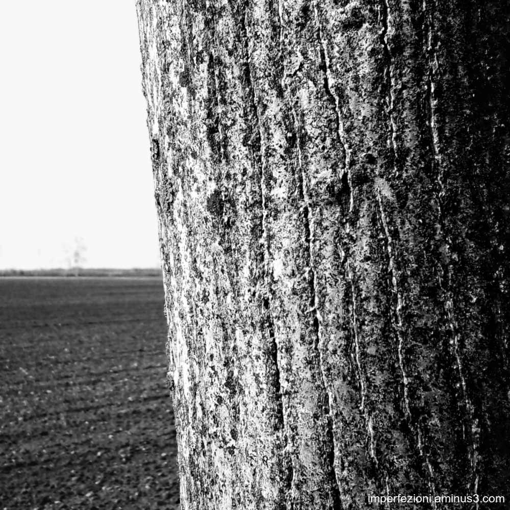 Rural abstract with bark - Astratto rurale con cor