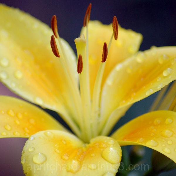 Flower 7