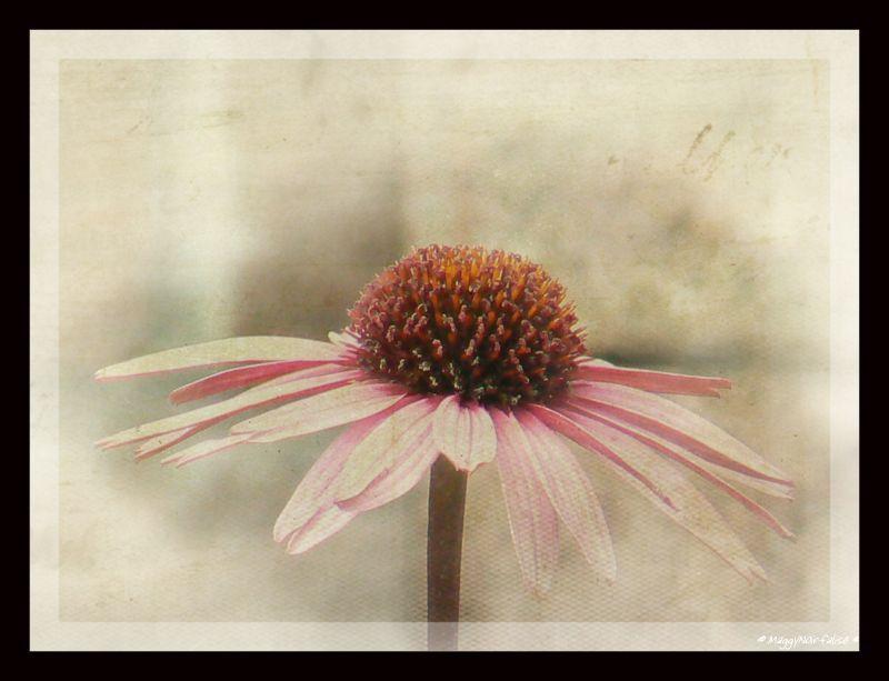 Douce fleur