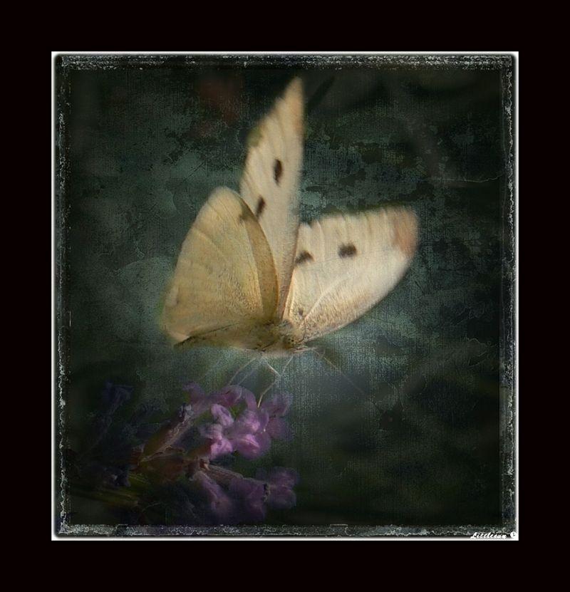 Papillon s'envole...