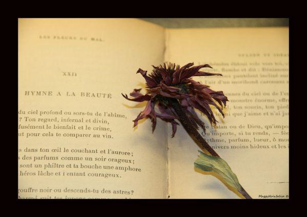 Un peu de poésie