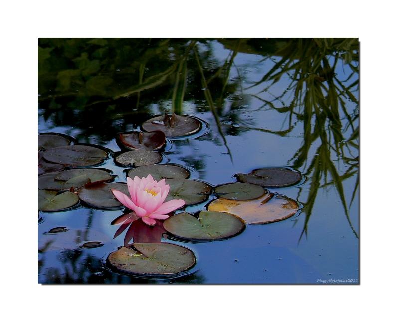 Restons zen par ce temps hivernal!