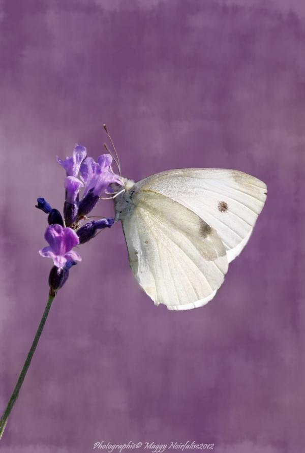 Joli papillon...