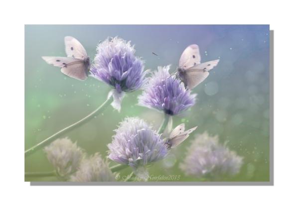Jolis papillons...
