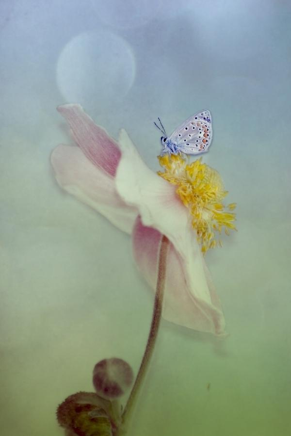 J'aime les papillons...