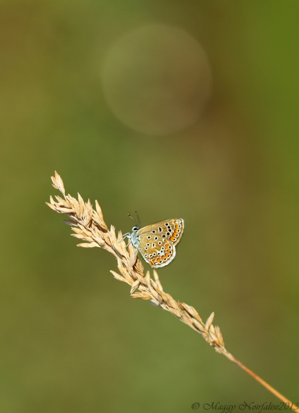 Papillon léger...