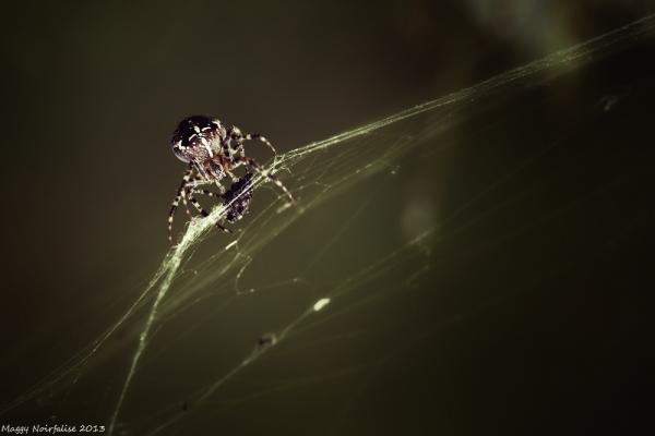 Araignée du soir......