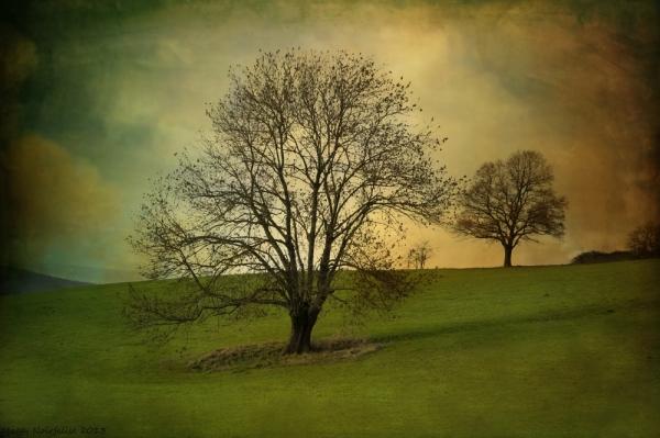 Le bel arbre