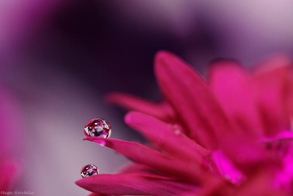 Gouttes fleuries