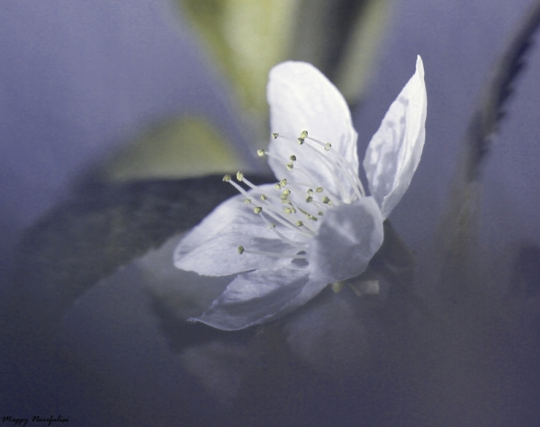 Douceur de fleur
