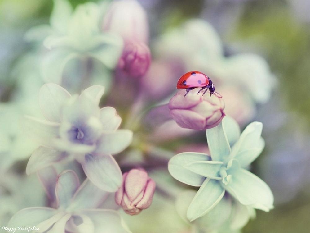 Dans le lilas
